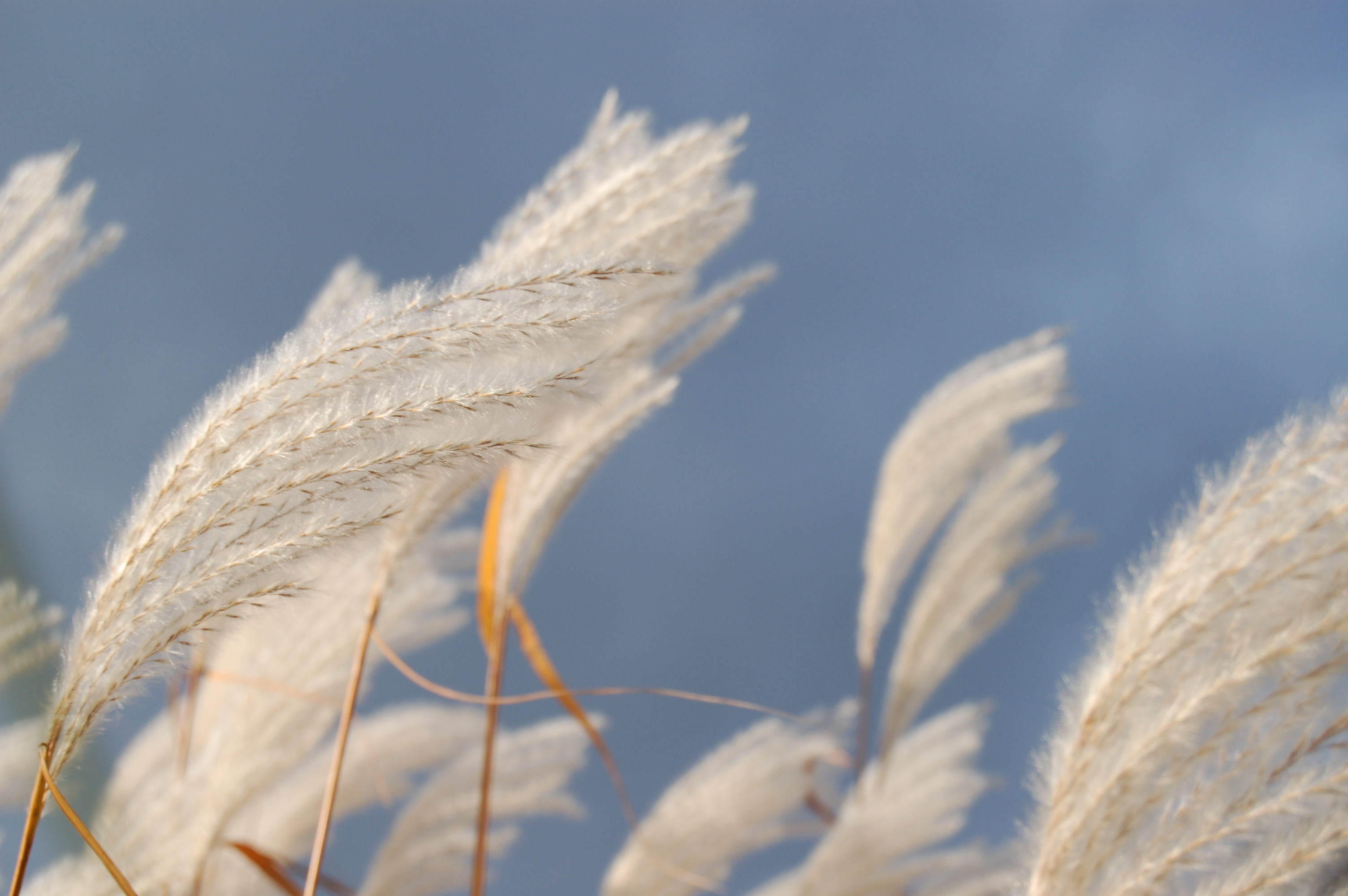 ornamental-grass-1388171